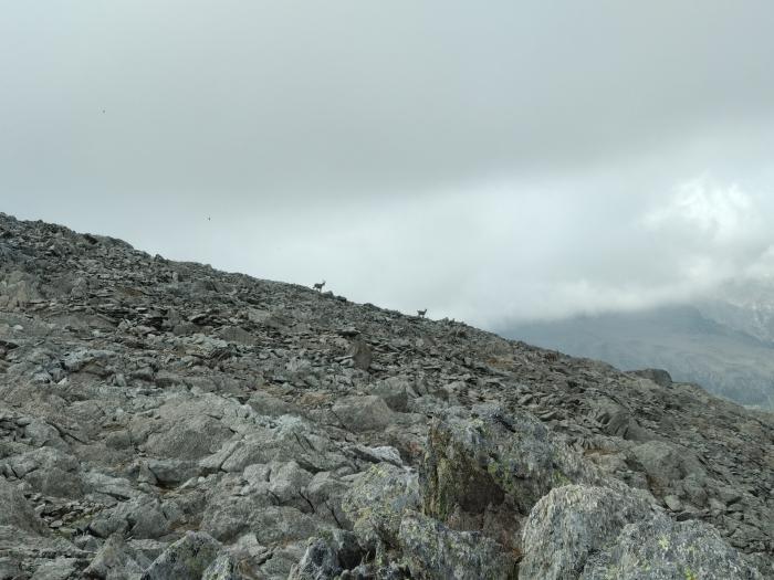 B1 vom Alpstein nach Airolo