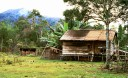ODS_Borneo_Kerayan_010f.jpg