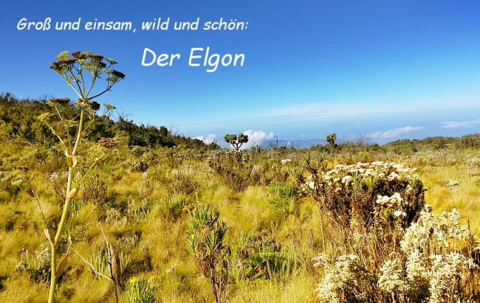 Elgon_ODS_Titel5