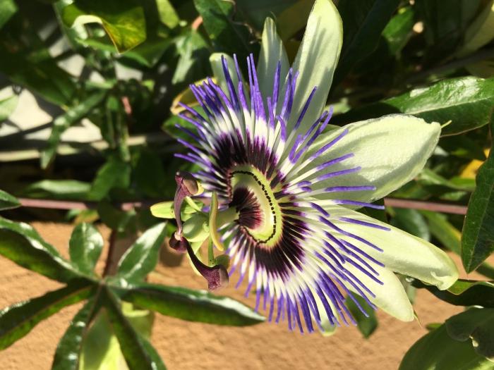 Unbekannte Zierpflanze