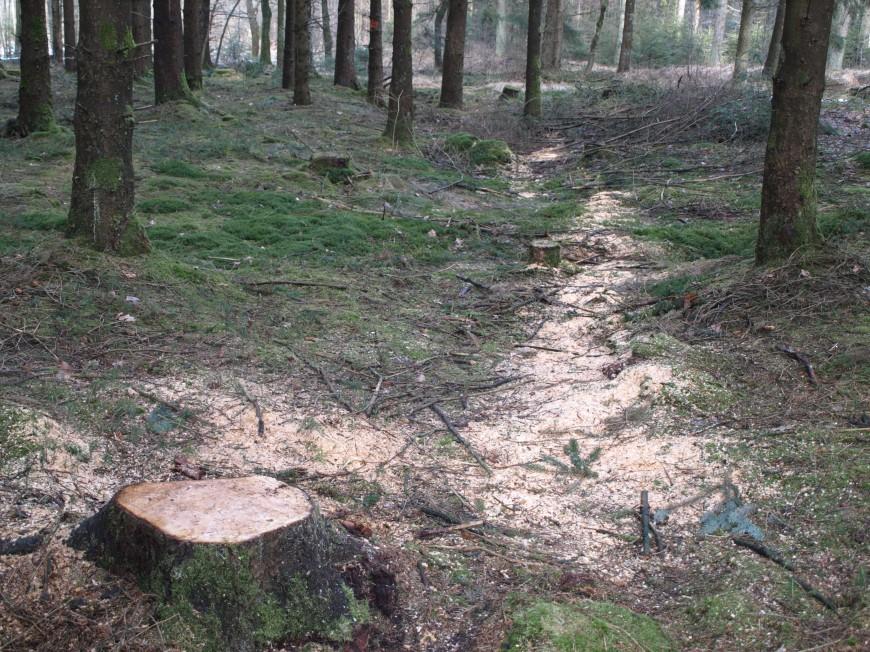 Klettergurt Für Baumfällarbeiten : Das sägen mit sägen: säge tipps aus der kunst des sägens [archiv