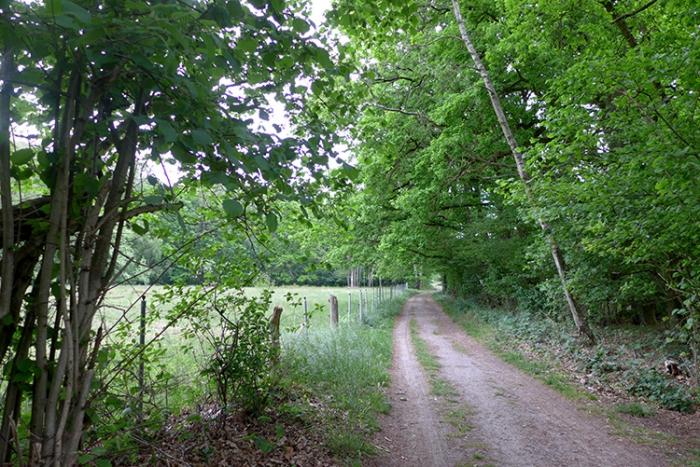 Moor_und_Heideweg