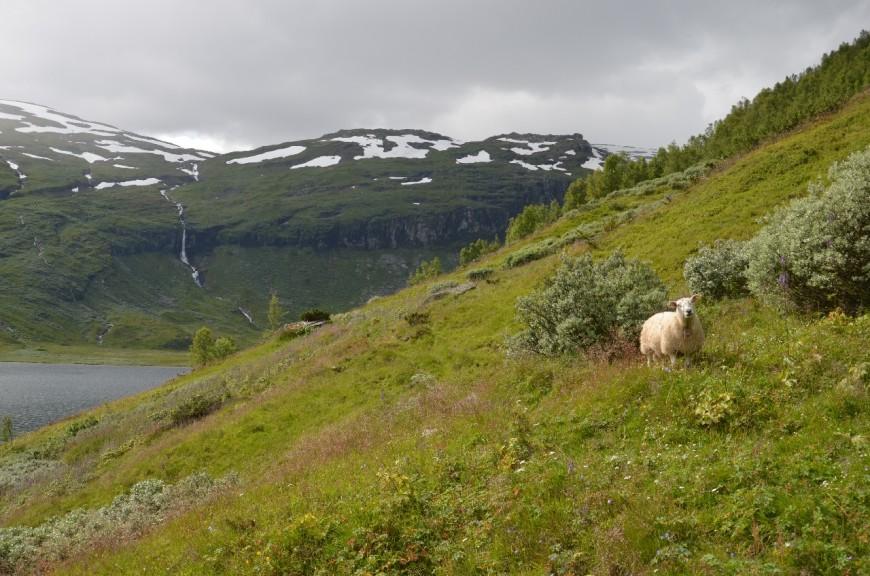 NO] Reinheimen, Tafjordfjella, Breheimen, Jotunheimen & Nordmarka ...