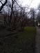 Babisnauer_Pappel_90.jpg