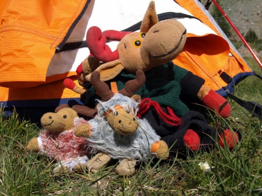 Knut & Lars, Elchi & Anna